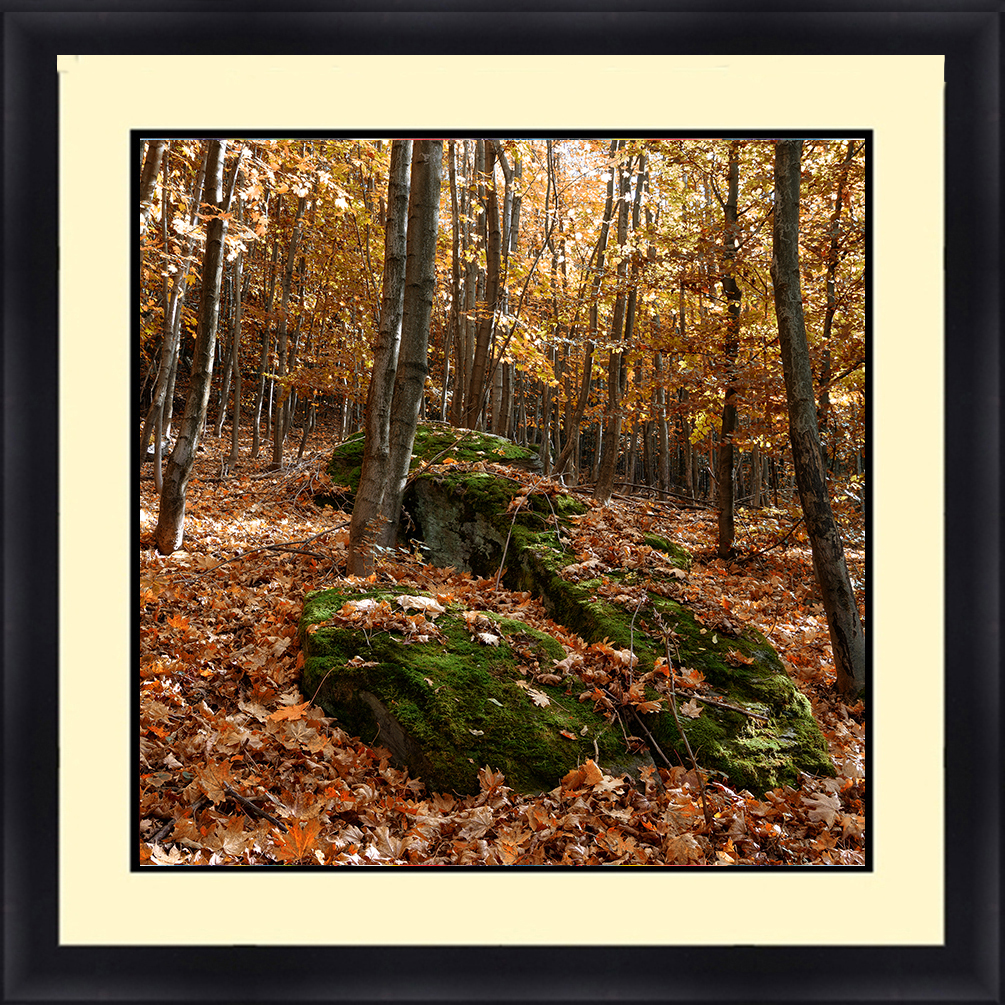 L-18030 Nature Landscape 24 x 36 Framed Available In